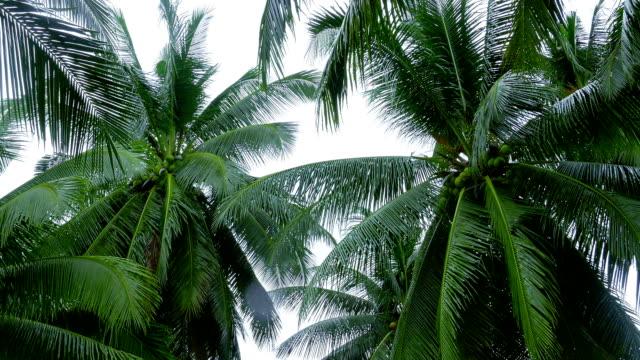 top der kokospalmen auf himmel hintergrund - klammer stock-videos und b-roll-filmmaterial