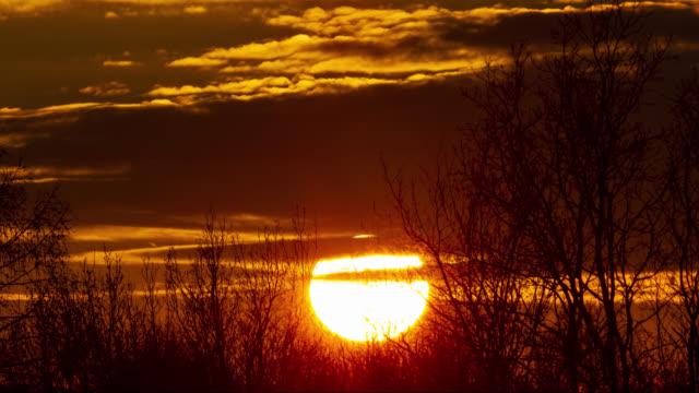 toppen av kullen med solen i närbild inställning bakom - bare tree bildbanksvideor och videomaterial från bakom kulisserna