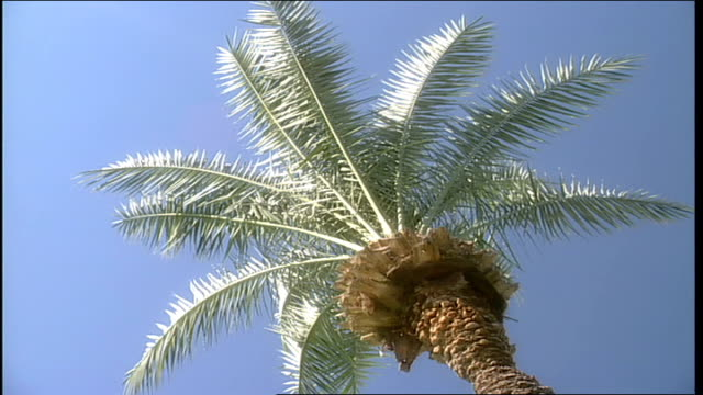 top of palm tree in phoenix arizona - natural land state stock videos & royalty-free footage