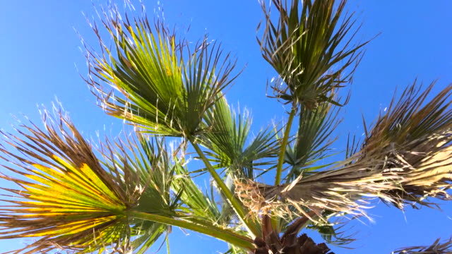 top of palm tree - tropical tree stock videos & royalty-free footage