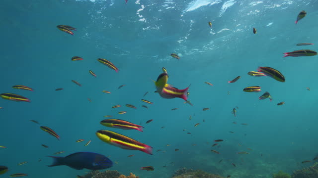 top of reef with many small fish - tropischer fisch stock-videos und b-roll-filmmaterial