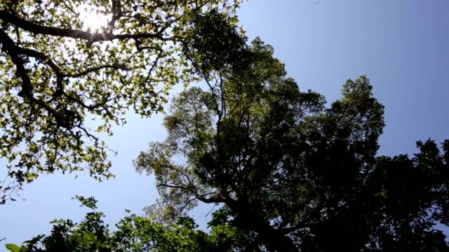 vídeos y material grabado en eventos de stock de hd vdo: parte superior de árbol con cielo y la luz del sol - contraste alto