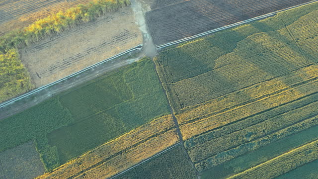 top shot of fields cultivated with sugar cane and other plants seen from above in luxor / egypt. - environmental conservation stock videos & royalty-free footage