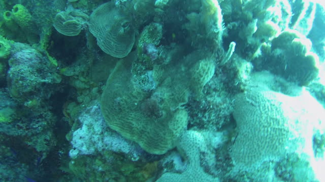 stockvideo's en b-roll-footage met top shot of the cozumel reef - supersensorisch
