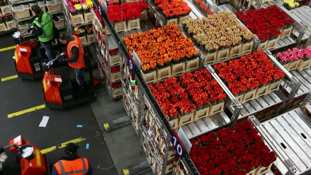 top shots bunches of flowers sit stacked on trolleys which move along automated tracks before distribution at floraholland the largest flower auction... - auction stock videos & royalty-free footage