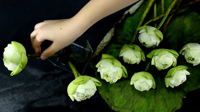 top view and panning: arrange folded lotus - order stock videos & royalty-free footage
