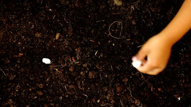 4 k 上面ビュー、ツリーを植える少年 - 植える点の映像素材/bロール