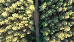 Top view Flying over Old Patched Forest Road. Woods growing both sides