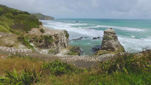 vídeos de stock, filmes e b-roll de top view gannet colony. - coluna de calcário marítimo