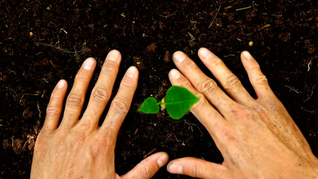 4 k 上面図、木を植える男 - 植える点の映像素材/bロール