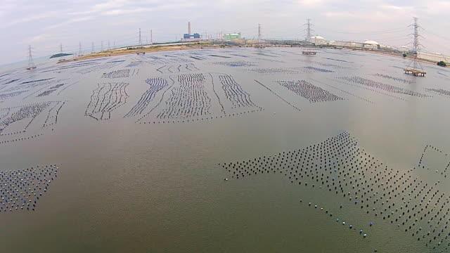 上面表示: ムール海のファーム海岸沿いのタイ - ムール貝点の映像素材/bロール