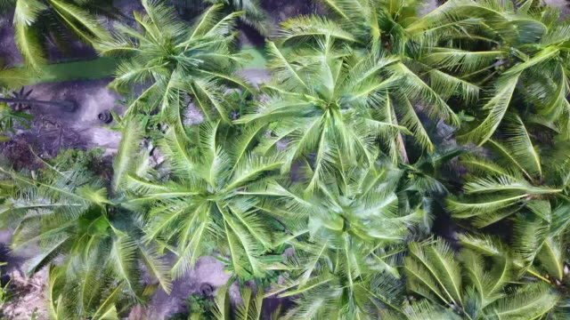 top view of agriculture coconut garden - plant nursery stock videos and b-roll footage