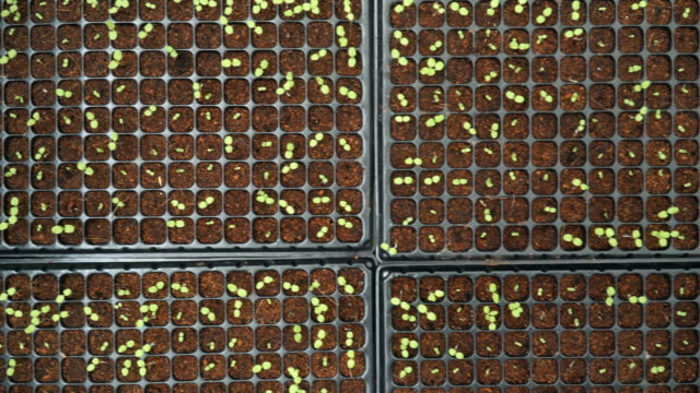 top view of beginning life in rows - square composition stock videos & royalty-free footage
