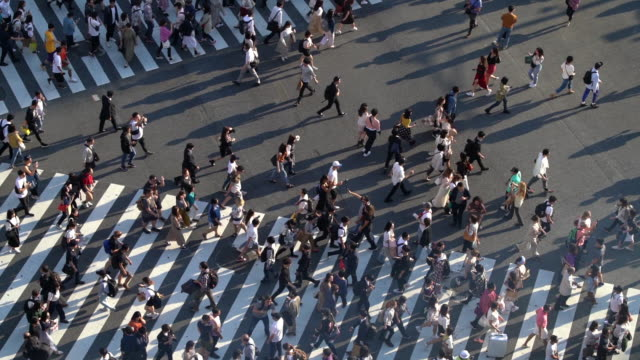 slo mo top view of crowd pedestrians at shibuya crossing in tokyo, japan - road junction stock videos & royalty-free footage