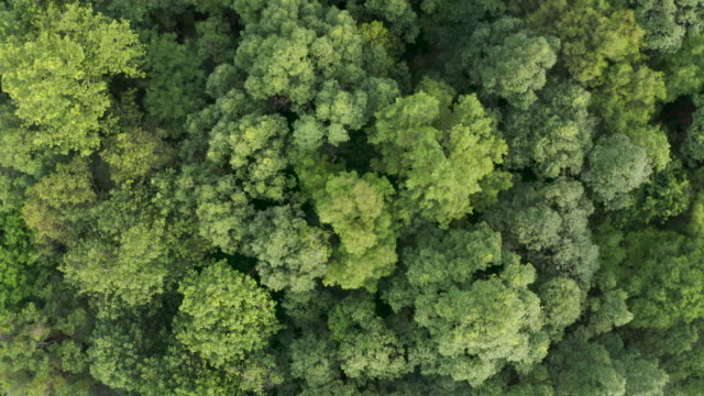 top view of dense forest trees - coniferous stock videos & royalty-free footage