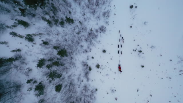 top view of dog sledding on deep snow with copy space - tracking shot stock videos & royalty-free footage