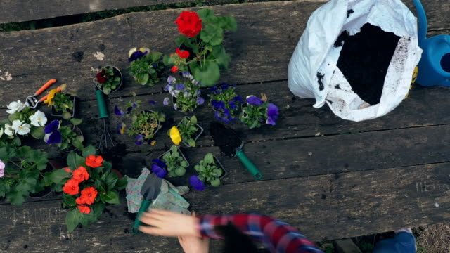 stockvideo's en b-roll-footage met hoogste mening van bloempotten - table top shot