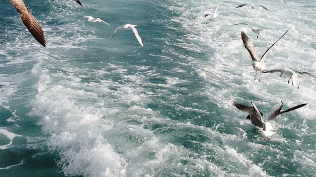 top view of flying seagulls - becco video stock e b–roll