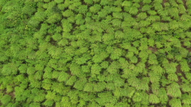 top view of grass texture with windy motion - sea grass plant stock videos & royalty-free footage
