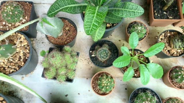 top view of group of cactus garden,plants shop,panning from left to right,gerdening concept. - succulent plant stock videos & royalty-free footage