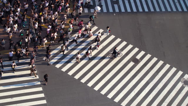 slo mo top view of pedestrians at shibuya crossing in tokyo, japan - zebra crossing stock videos & royalty-free footage