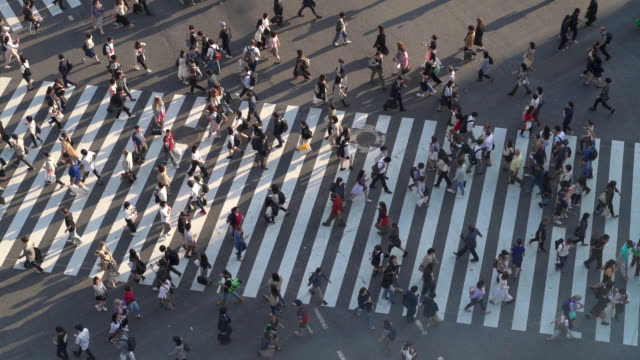 slo mo top view of pedestrians at shibuya crossing with long shadow in tokyo, japan - road junction stock videos & royalty-free footage