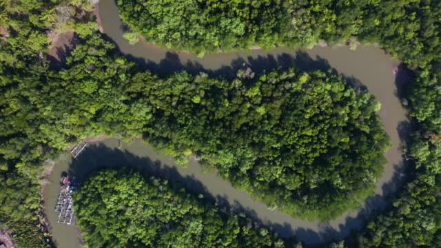vídeos de stock, filmes e b-roll de vista superior da floresta tropical e do rio curva s - região amazônica