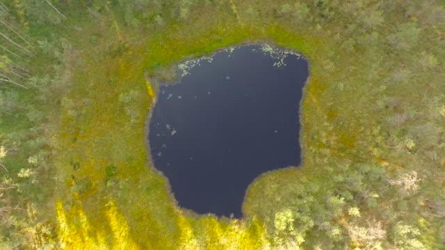 vidéos et rushes de vue sur le bassin est entouré par une forêt-vue aérienne 4 k - mousse végétale