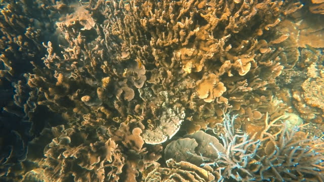 vídeos de stock, filmes e b-roll de a top view shot of a coral reef - organismo aquático