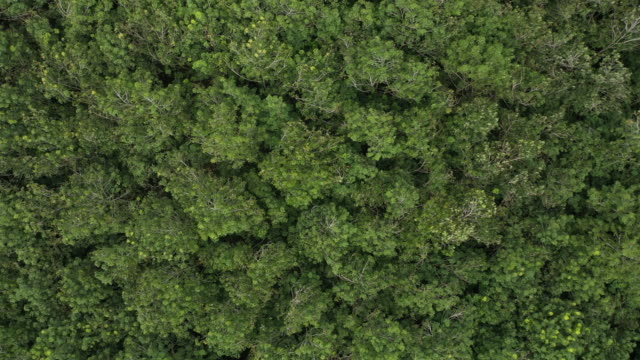 top view zoom out of rainforest and wind - copertura di alberi video stock e b–roll