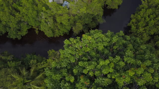 top-down aerial of boat on river in everglades - everglades national park stock videos & royalty-free footage
