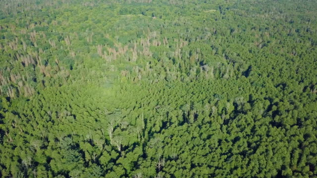 tops of forest. aerial view. from above. top view - poland stock videos & royalty-free footage