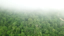 Tops of Trees in Tropical Forest in Honduras