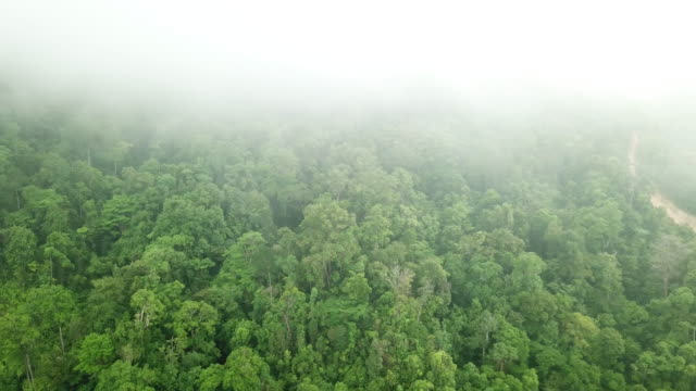 tops of trees in tropical forest in honduras - america centrale video stock e b–roll