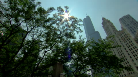 tops of wrigley building w/ clock tower & trump international hotel & tower, sun in blue sky between leaves on tree to north michigan avenue,... - wrigley building video stock e b–roll
