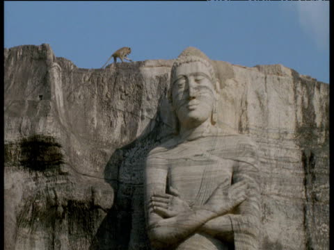 toque macaque walks over the top of large buddhist statue, polonnaruwa - temple building stock videos & royalty-free footage