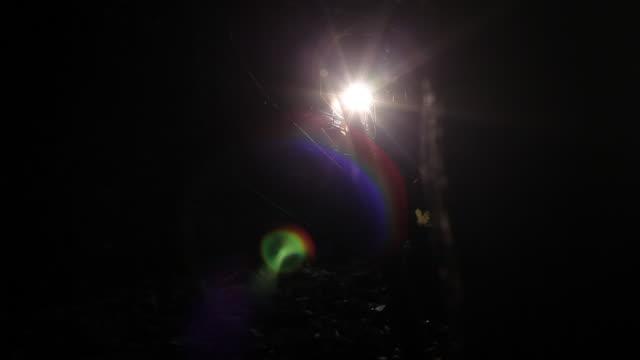 torchlight searching forest - taschenlampe stock-videos und b-roll-filmmaterial