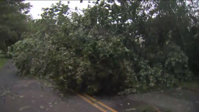 Tornado Causes Damage Produced Report on August 10 2012 in Bohemia New York
