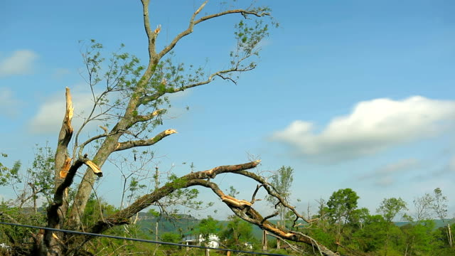 Tornado weather damaged trees