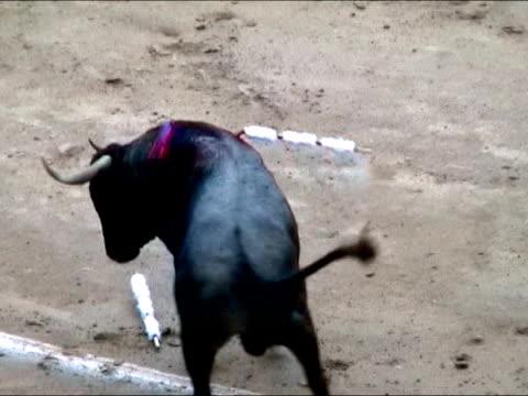 toro - bullfighter stock videos & royalty-free footage