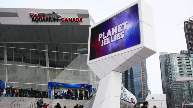 toronto, ontario, canada-may 20, 2015: a view to the large scale screen outside of the ripley's aquarium which is located in the downtown district of... - large scale screen stock videos & royalty-free footage