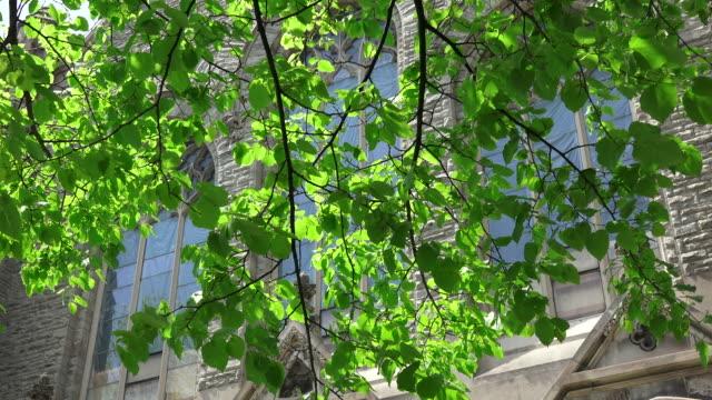 vídeos de stock, filmes e b-roll de toronto,canada: beautiful green color of tree in spring season. knox presbyterian church in the background. - câmara parada