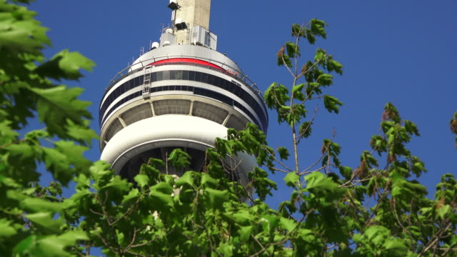 toronto,canada: cn tower framed by a tree in a beautiful blue clear sky - cn tower stock videos & royalty-free footage