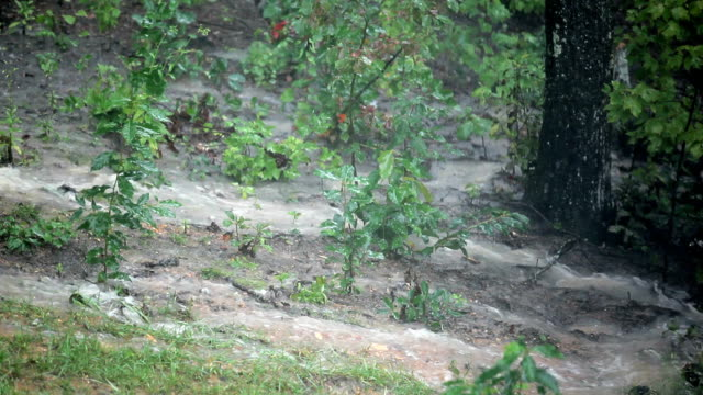 Torrential rain and flooding in the woods