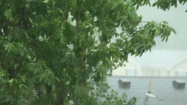 torrential rain and high winds in storm - thunderstorm stock videos & royalty-free footage