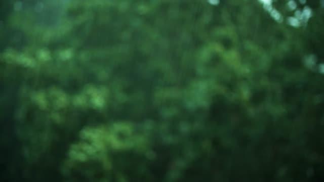 Pluie torrentielle qui tombe sur les arbres à feuilles caduques au cours d'orage