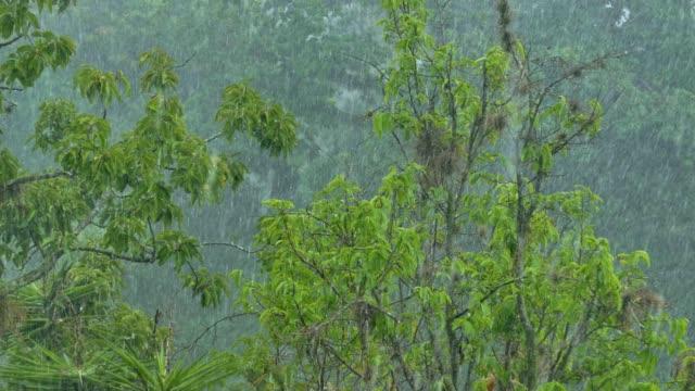 torrential rain falling on trees. caracas, venezuela - 集中豪雨点の映像素材/bロール