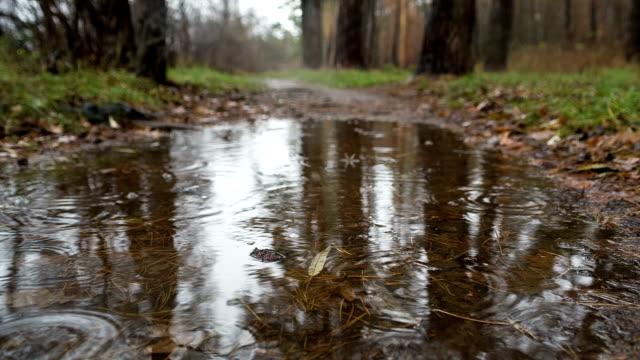 集中豪雨にある秋の森ます。 - landscape scenery点の映像素材/bロール