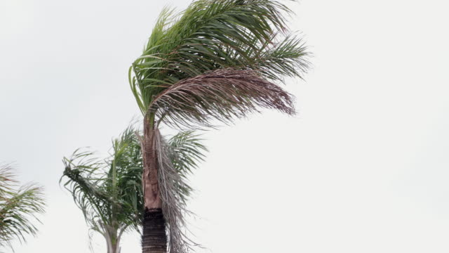 torrential rain in cayo coco, cuba - damaged stock videos & royalty-free footage