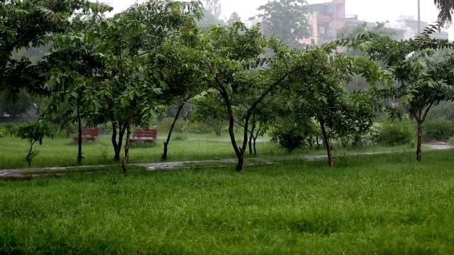 torrential rain in city park - torrential rain stock videos & royalty-free footage